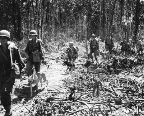 Dogs & Handlers Starting Out on Patrol, Aitape, New Guinea